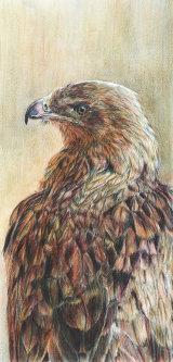 Monarch - £475 - colour pencil and wash