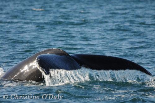 Hooky the Whale