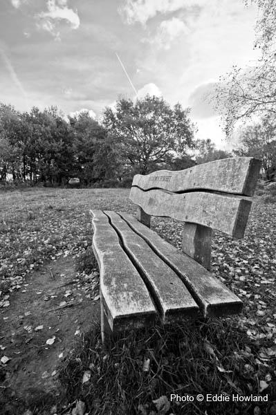 Bench in Ashdown Forrest