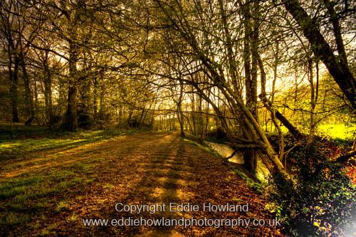 Balcombe Woods, Sussex