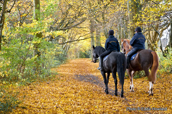 Autumn on Horseback