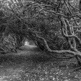 Trees - Autumn #5