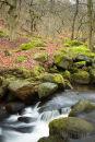 Brook at Padley Gorge