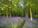 Dockey Wood Path 2