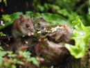 Mouse on a flint