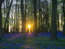 Magic Moment in a Bluebell Wood