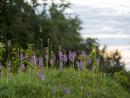 Fragrant Orchids at Dusk