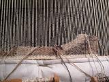 Weaving under way