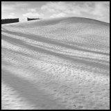Rabbit footprints in snow