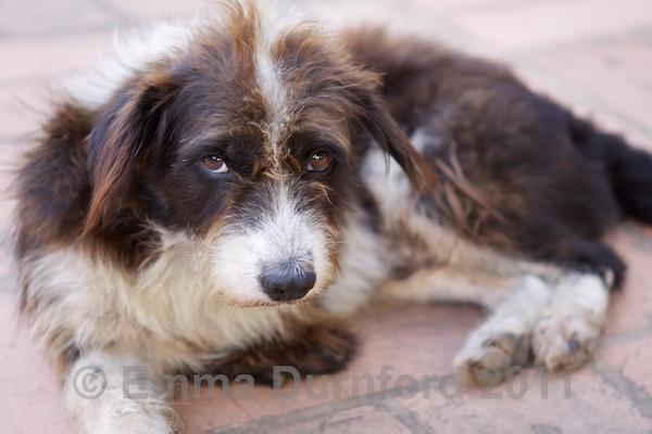 3-legged temple dog