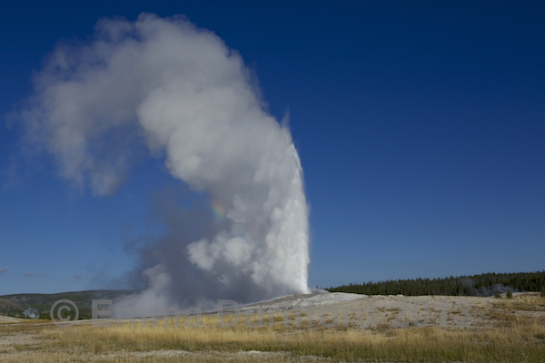 Old Faithful Geyser erupting