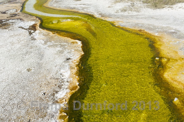 Algae and thermophiles