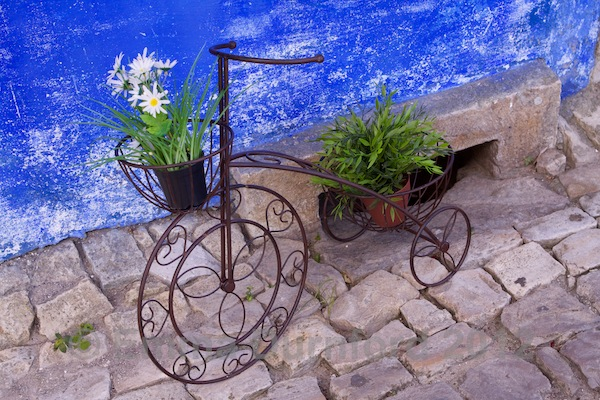 Daisies and bicycle