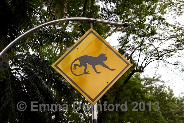 Monkey Crossing!