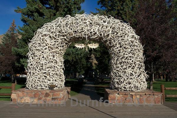 Elk Antler Arch