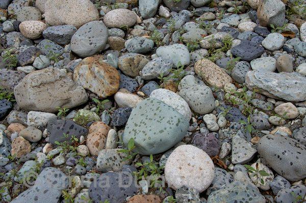 Rain painted pebbles