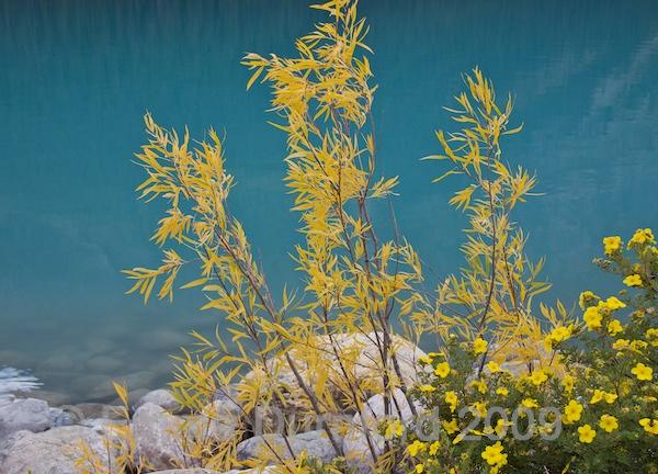 Yellow and azure