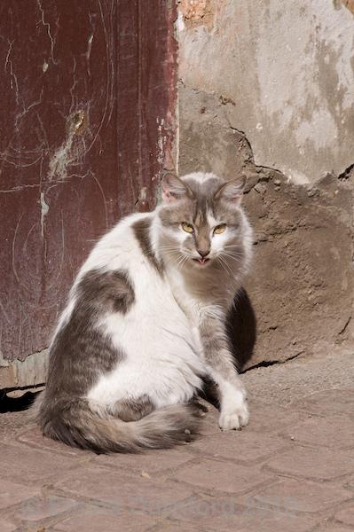 Rude cat