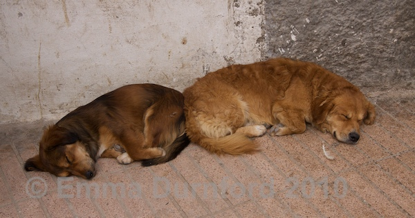 Let sleeping dogs lie...