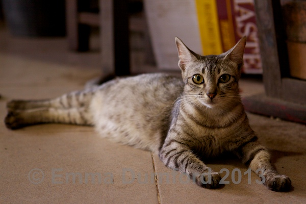 Another temple cat