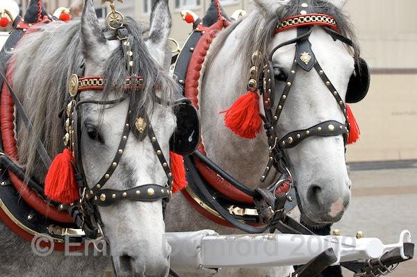 Polish horses