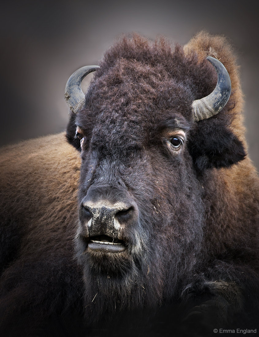 Mighty Bison