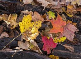 Fall Leaves on log