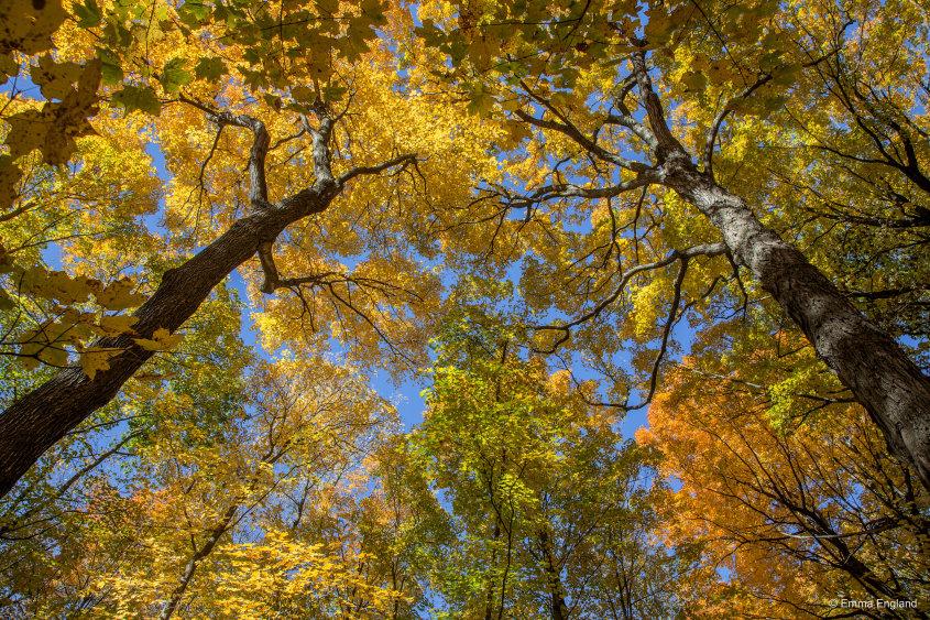 Shades of Fall Colour