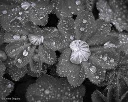 Leaf Pools