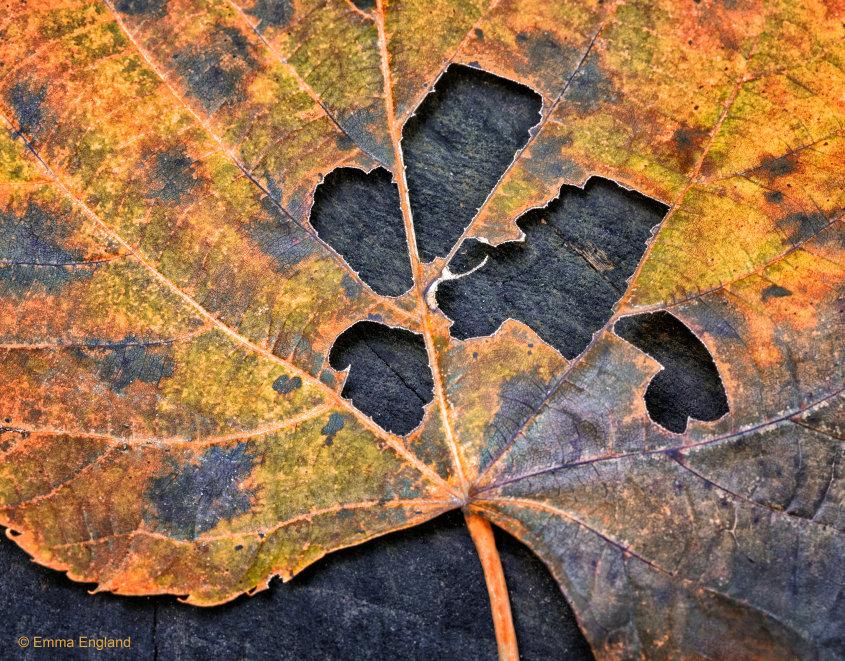 Fall Leaf in Detail