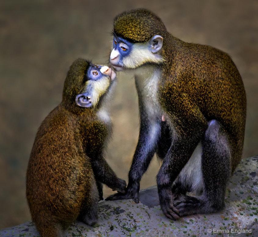 Monkey Kiss
