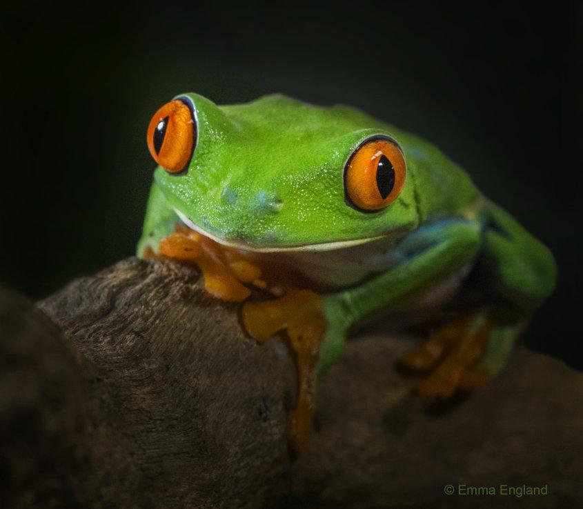 Cute Kermit