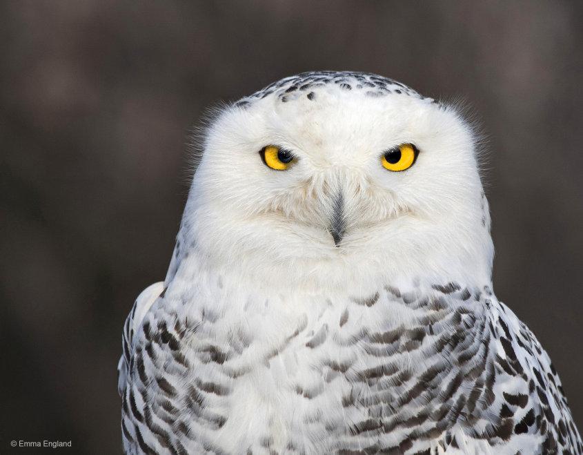 A Snowy Stare