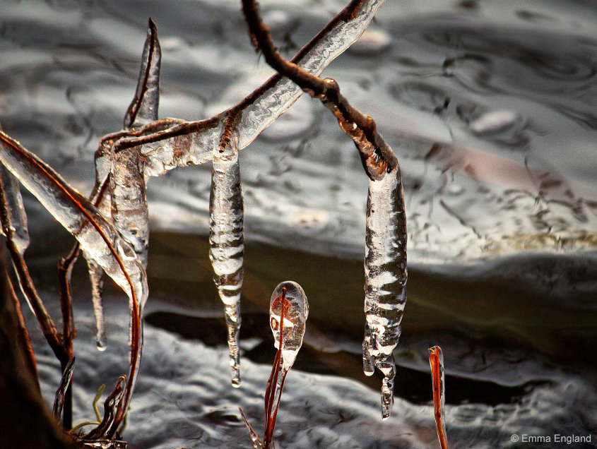 Tree icicles