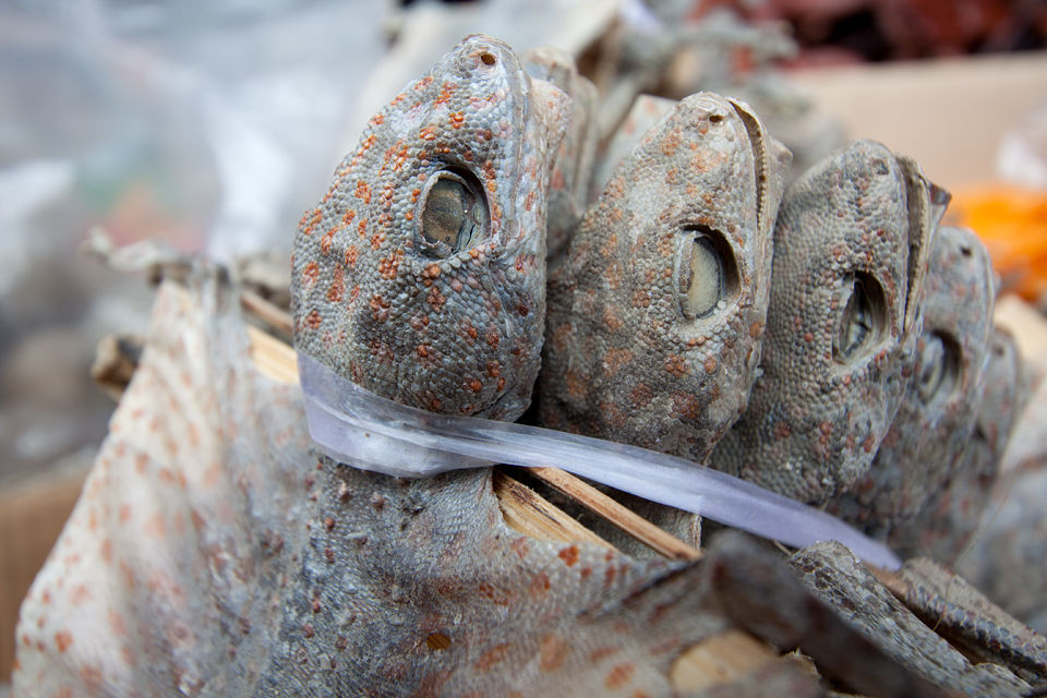 Dried Tokay Gecko's (Gecko gecko) on a traditional medicine market. Canon 50D, Canon EF-S 10-22mm f/3.5-4.5 USM, 1/50, f/5.6, iso 100, handheld.