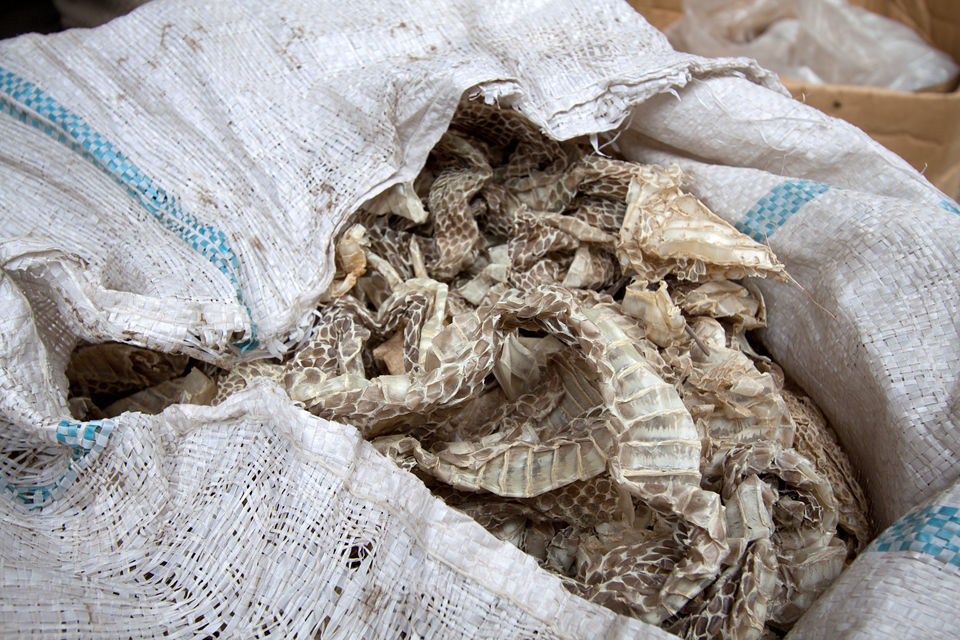 Bags of shed snake skin. Dead scorpions for sale. Canon 50D, Canon EF-S 10-22mm f/3.5-4.5 USM, 1/80, f/7.1, iso 100, handheld.