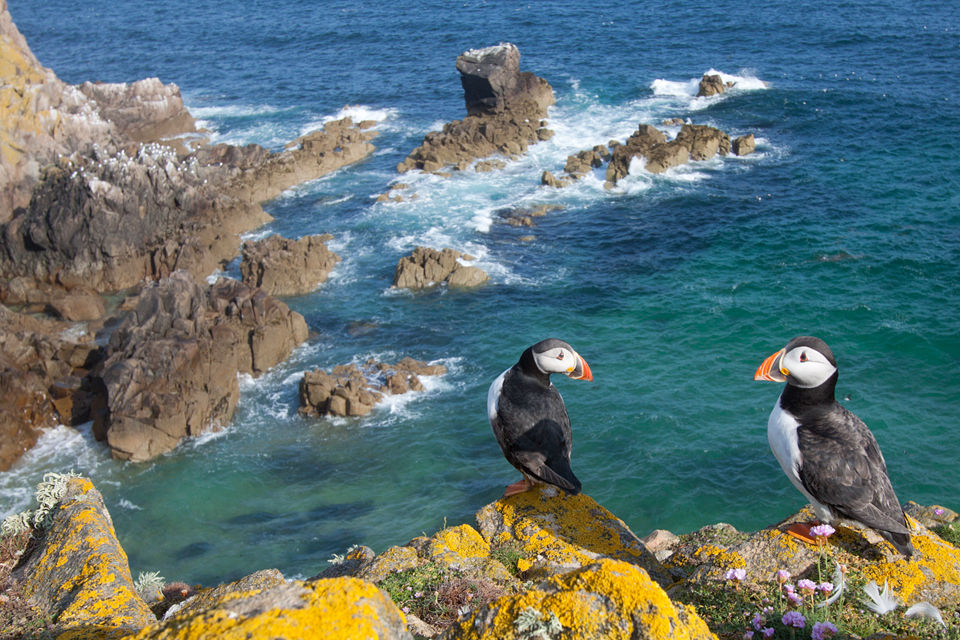 Two puffins on their rock cliff at the Atlantic. Canon 50D, Canon EF-S 10-22mm f/3.5-4.5 USM, 1/160, f/10, iso 100, handheld.