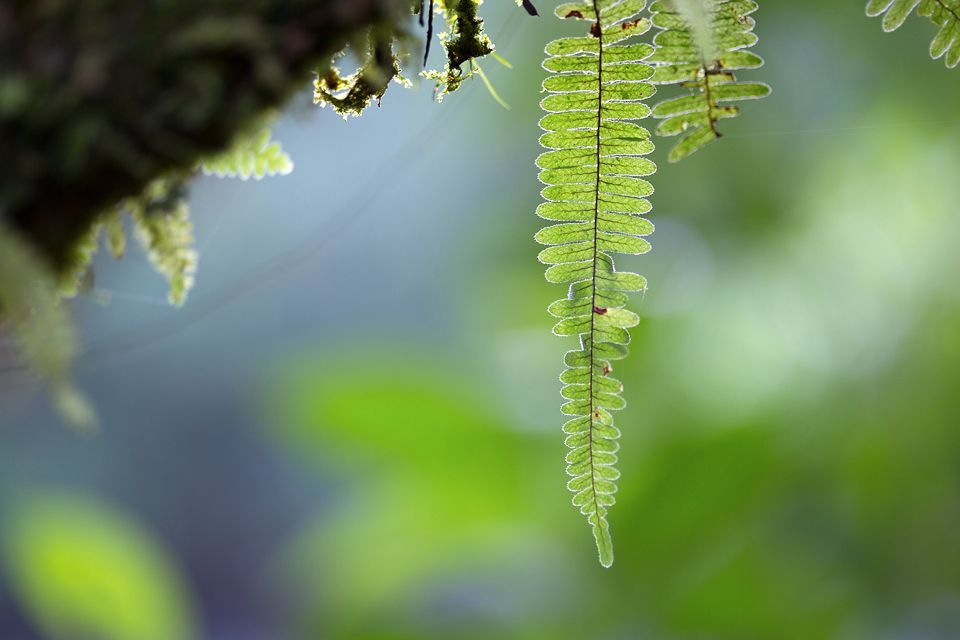 Detail of a fern. Canon 5D MKIII, Canon EF 100mm f/2.8 USM Macro, 1/80, f/2.8, iso 320, handheld.