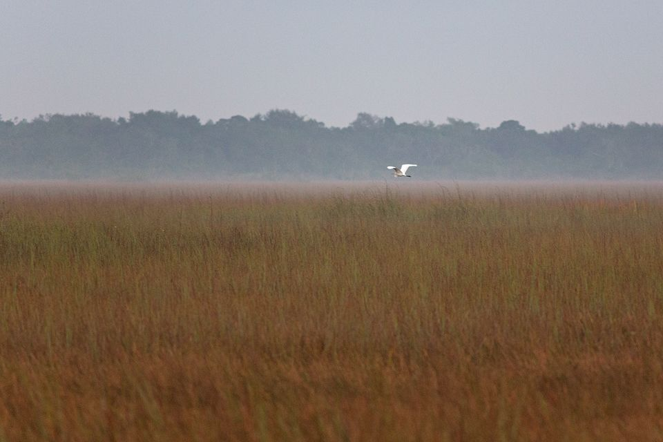 Great egret (Ardea alba) flying over a foggy early morning landscape. Canon 5D Mark III, Canon EF 400mm f/5.6 L USM, 1/200, f/5.6, iso 3200, handheld.