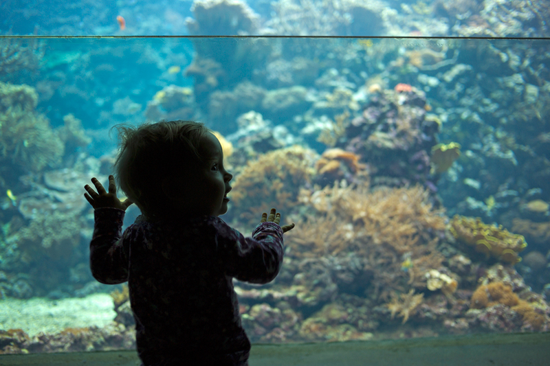 My daughter immersing herself at Burgers' Ocean.