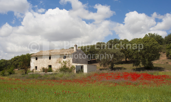 Derelict house ,Andalucia Spain