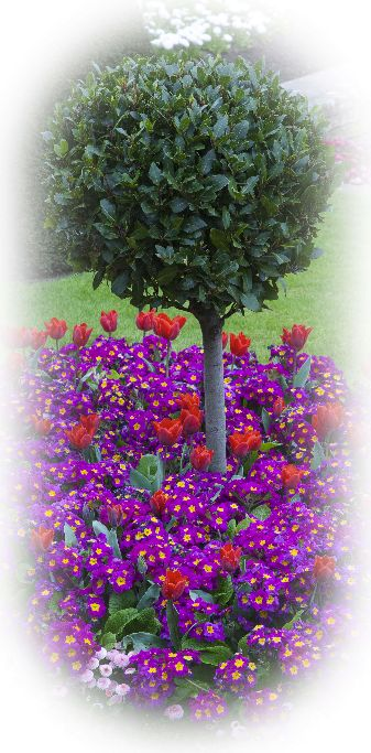 Round Bush & Spring Flowers ,Vignetting Effect