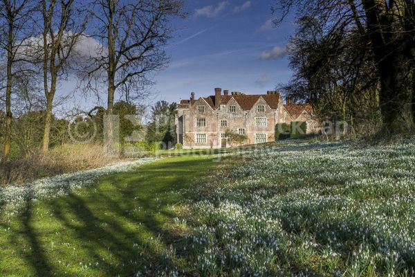 Snowdrops at Chawton House ,Hampshire