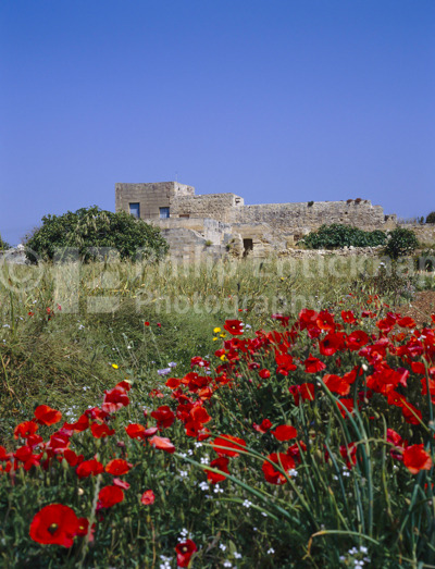 Typical farmhouse and poppies.