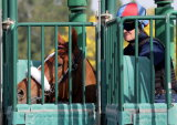 Main Sequence gate schooling