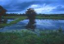 Somerset Levels in flood, I