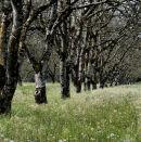 Nr. Castelnaud, Dordogne, France