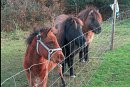 seaside bb ballinskelligs ponies 2