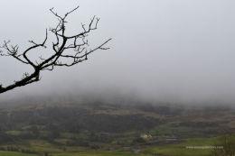 Druids fog
