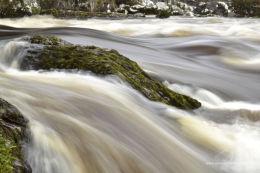 Moss water